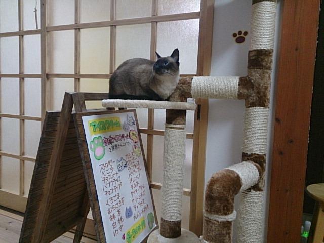 猫柱の移動しました