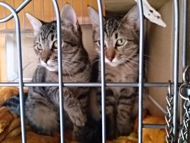 里親募集猫ちゃん一家