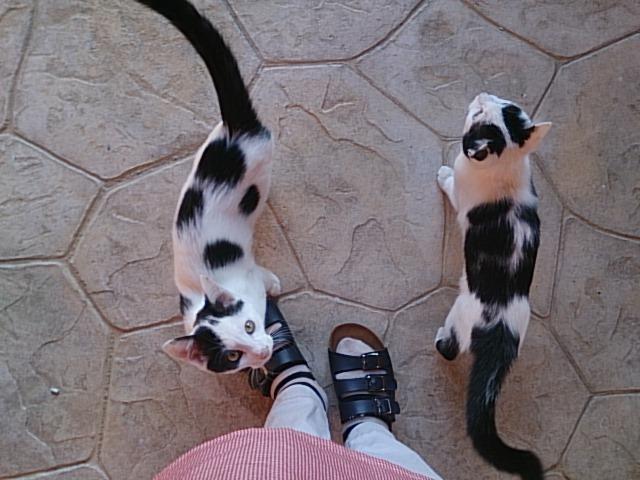 保護猫シェルターに