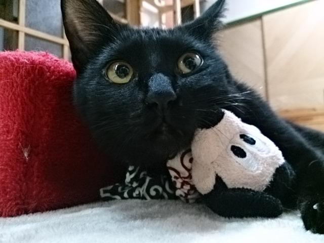 ミッキーを枕に