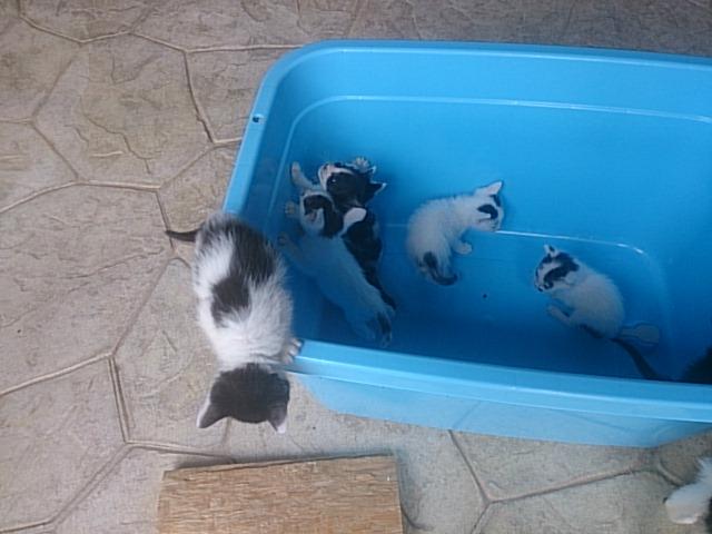 里親様募集中 10匹の猫ちゃん