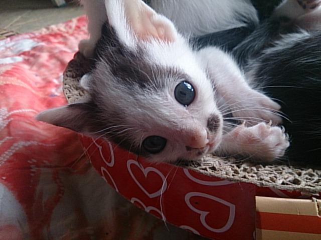 里親様募集猫 10匹
