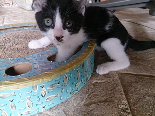 保護猫シェルター(外)