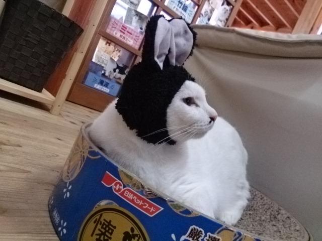 新種な?猫