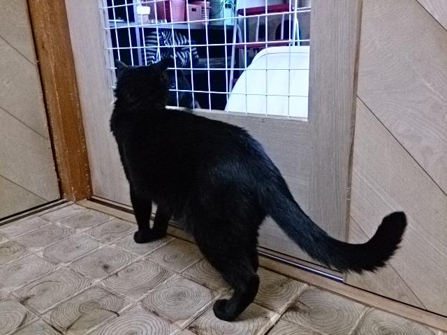 黒猫が6匹に