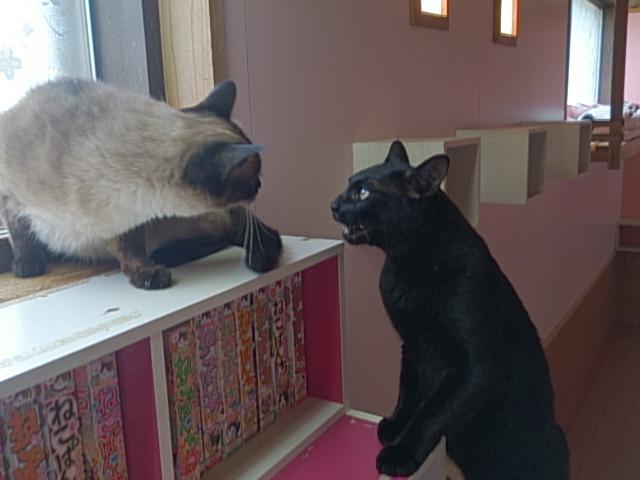 くろちゃんの猫カフェ見学
